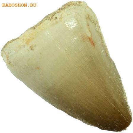 Зуб мозозавра