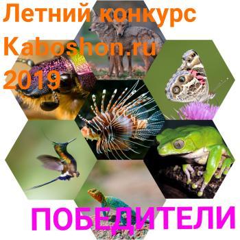 ИТОГИ Летнего конкурса 2019