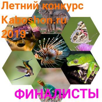 Финалисты Летнего конкурса 2019!