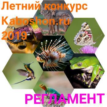 Летний конкурс 2019:  Фауна. О всех созданиях, больших и малых, или Еще одна нация планеты Земля